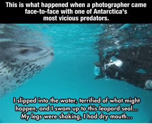 This is what happend when a Photographer came face to face with one of Antarctica's most Vicious Predators