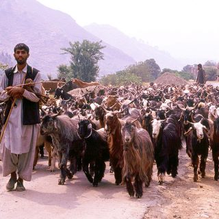 who are Gujjar Bakarwals