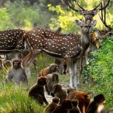 Jim Corbett National Parkpic with deer